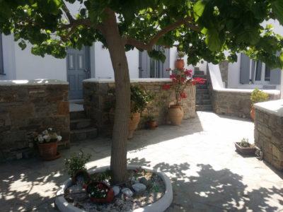 Κήπος και δέντρα στο ξενοδοχείο Hotel Indigo Studios στην Σέριφο